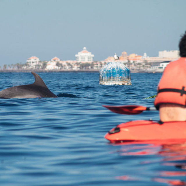 Kayaking w dolphins